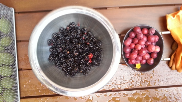 Blackberries and cherry plums