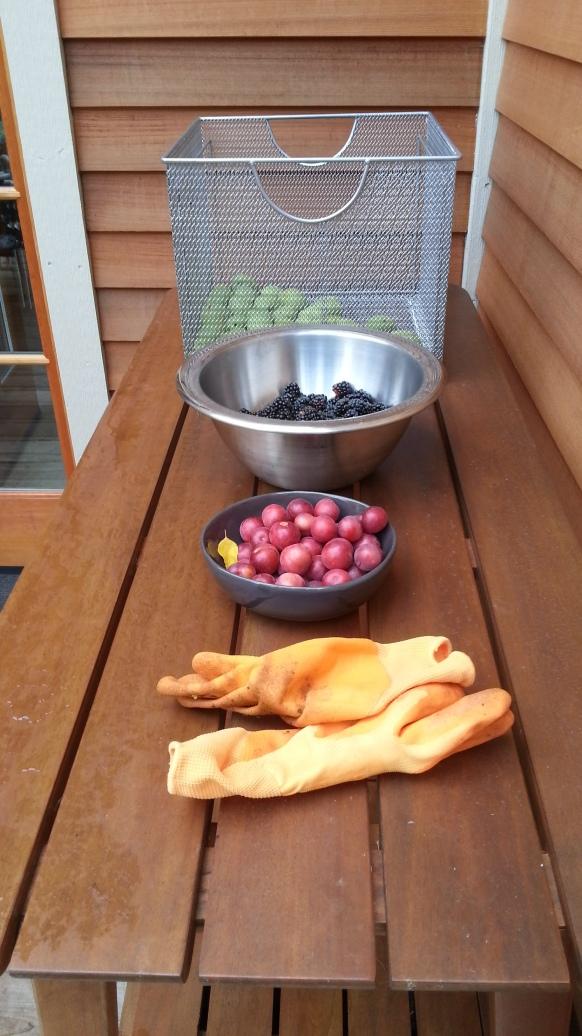 Plums, blackberries and black walnuts